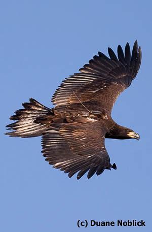 Azalea in flight above Norfolk Botanical Garden