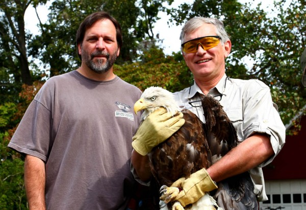 Bryan Watts and Ed Clark with the 6-year old bald eagle