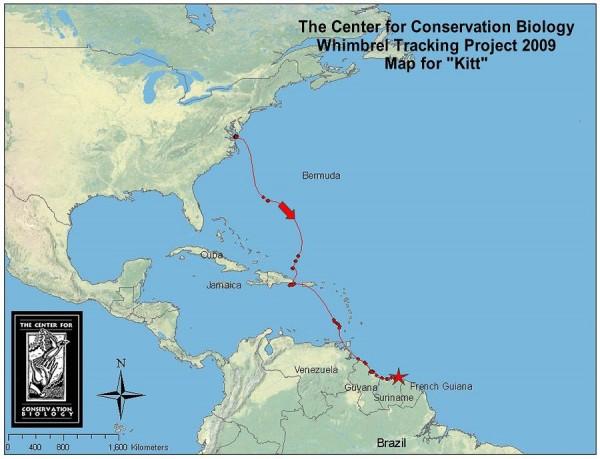 Kitt's migration through mid-January 2010
