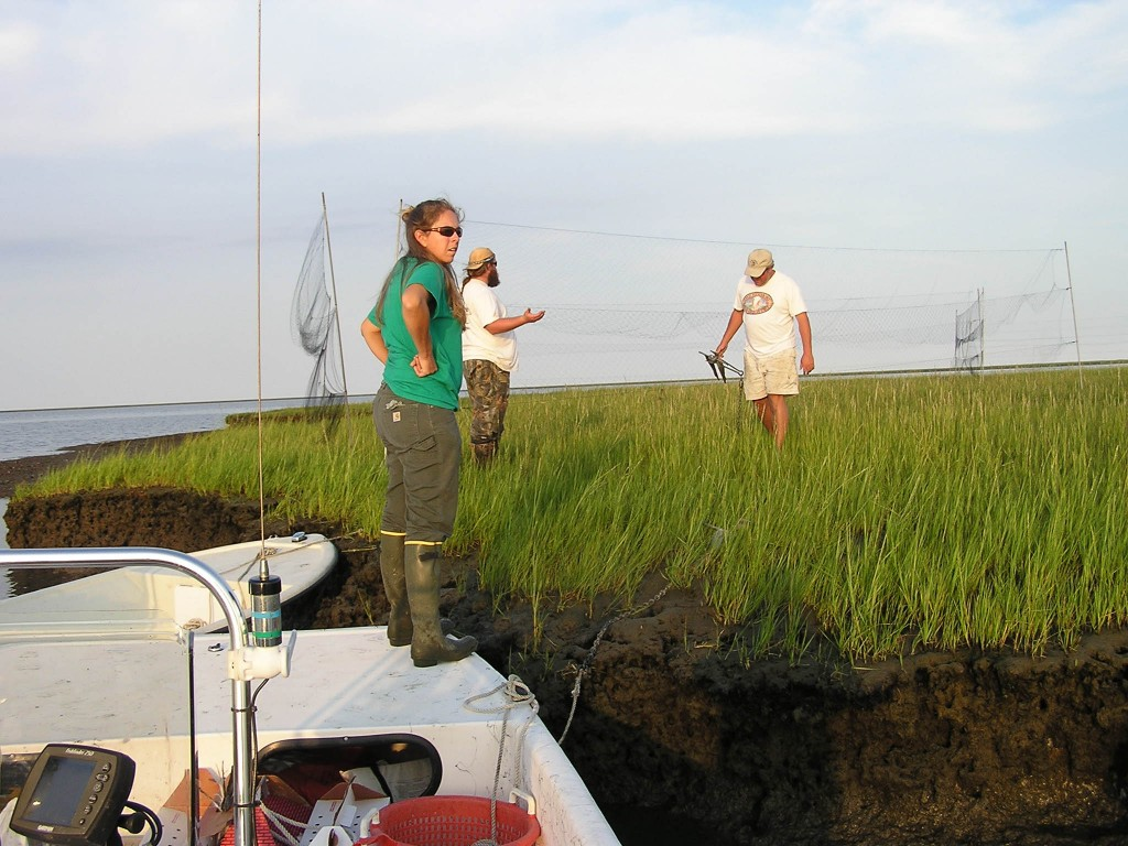 Libby Mojica, Fletcher Smith, and Bart Paxton set up nets in marshes along the Delmarva Peninsula