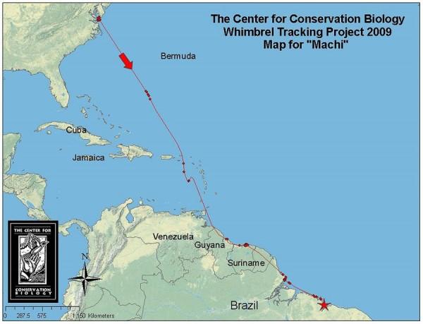 Machi's migration through December 2009
