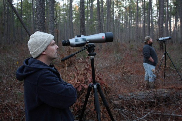 Michael Wilson and Fletcher Smith monitor early morning red-cockaded woodpecker activity