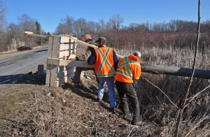 Working on an osprey nest platform in Prince Edward Ontario.