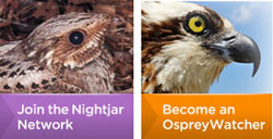 Join the Nightjar Network or Become an Osprey Watcher