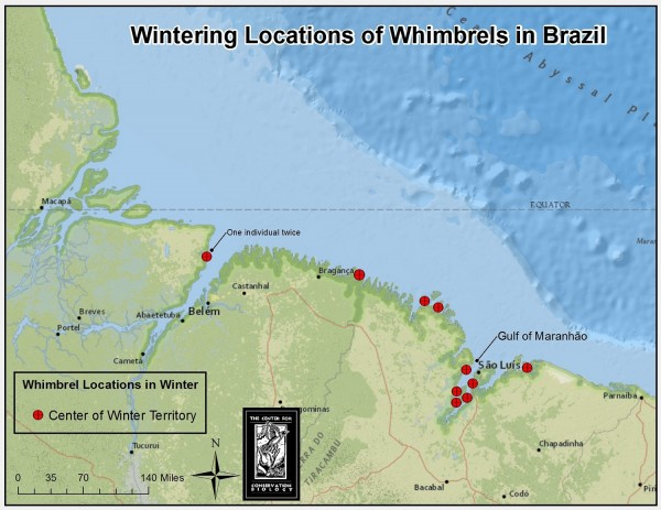 Map of territory locations for whimbrel wintering in Brazil. Map by CCB.