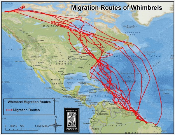 Map of whimbrel migration routes showing the convergence of birds on coastal Brazil. Map by CCB.