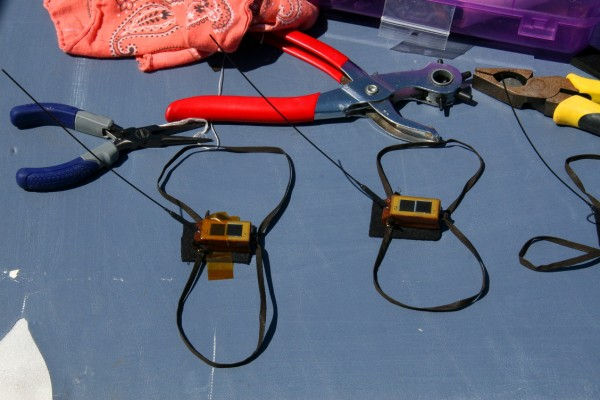 Satellite transmitters and harnesses used to track whimbrel. Photo by Barry Truitt