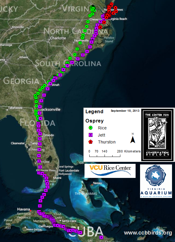 Tracking osprey on their southbound migration Fall 2013.