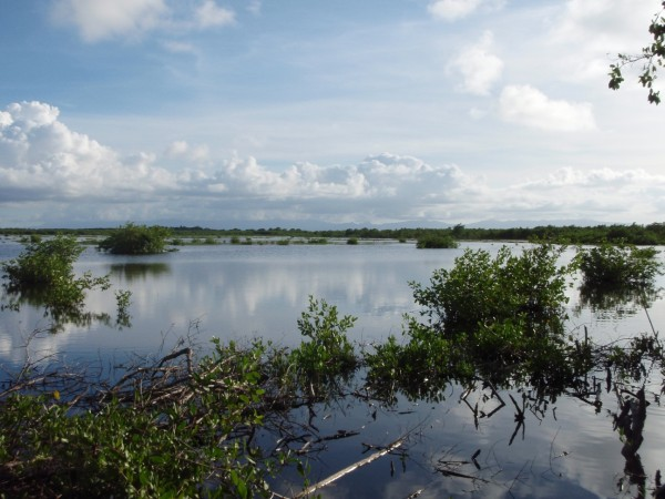 Port Louis shooting swamp in Guadeloupe where Goshen was shot in September of 2011. Photo by Fletcher Smith.