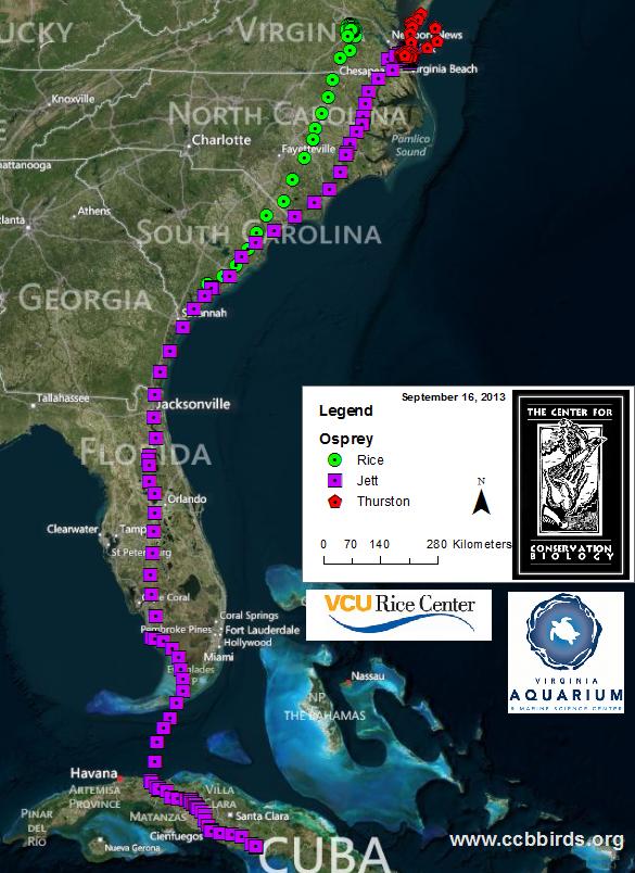 Osprey Migration Map 9/16/2013