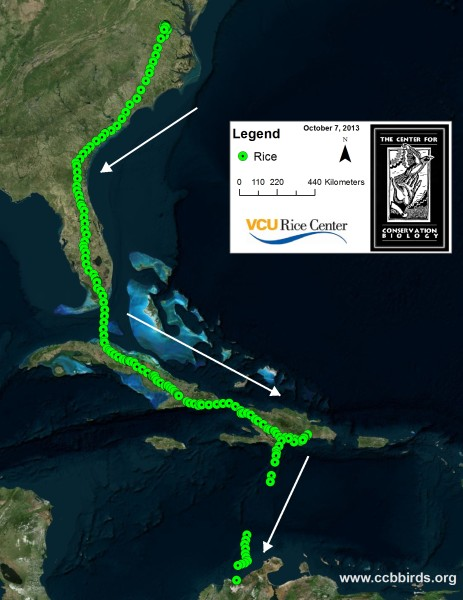 Migration path of Rice the osprey