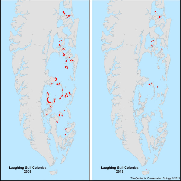 A comparison of laughing gull nesting colonies along the Lower Delmarva Peninsula in Virginia. Many colonies on marsh islands have fallen to sea-level rise between 2003 and 2013. Data from The Center for Conserv