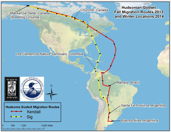 Fall migration routes for Hudsonian godwits Kendall and Sig. Significant staging areas were documented along Hudson/James Bay and within Colombia, Venezuela, Brazil, and Bolivia. Map by CCB.