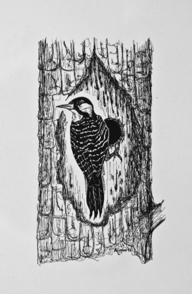 Artwork showing a red-cockaded woodpecker at cavity by Michael Lipford (Director of the Virginia Chapter of The Nature Conservancy).
