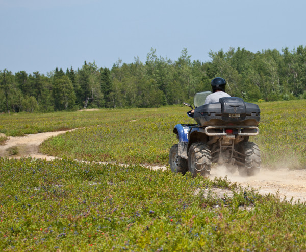 Warden patrols a blueberry field on the Acadian Peninsula on a four-wheeler.  These vehicles are used extensively to access fields.  Photo by Bryan Watts.