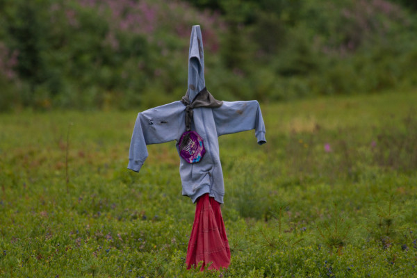 Scarecrow erected in field of blueberries on the Acadian Peninsula.  Many types of scarecrow devices were used in the area including raptor kites, hanging balloons and swinging pie plates.  Photo by Bryan Watts.