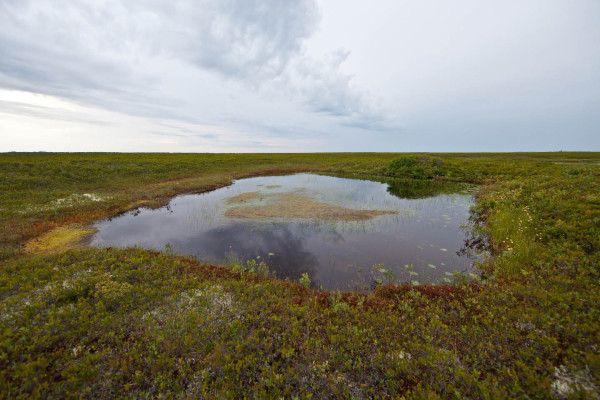 A small pond near Windsors Malbay on Miscou Island, New Brunswick. This site was a known fall staging area for migrating dough birds. Photo by Bryan Watts.