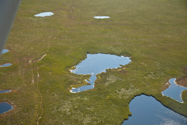 Wagon tracks extending through the bog are the only reminder of the hunting camps from the 1800s on Miscou Island. Photo by Bryan Watts.