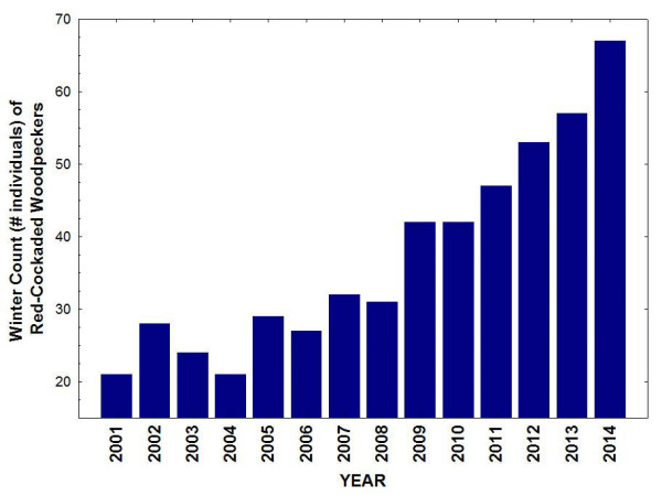 Results of winter population counts of red-cockaded woodpeckers at the Piney Grove Preserve since 2001. Data from CCB.