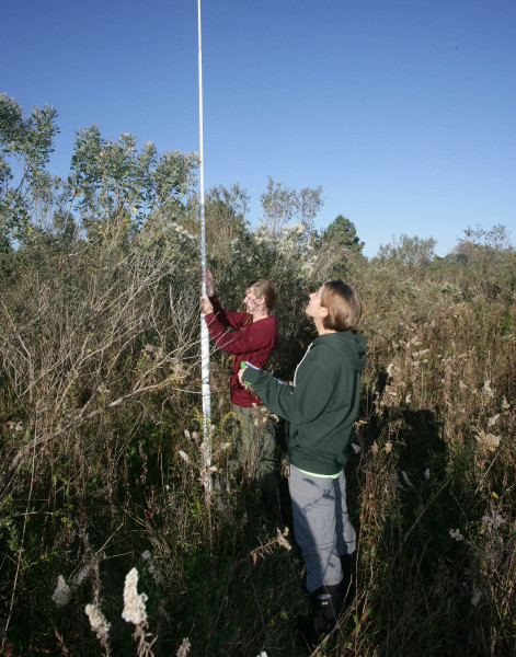 Sarah (left) and Arianne (right) measure fruiting plant density using a robel pole. This technique was used at 2,120 locations across 9 forest and 9 shrub patches. Photo by Bart Paxton.