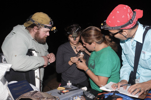 Jailene Alfaro (middle left) holds a western sandpiper as Yenifer Diaz (middle right) applies a coded leg flag. Fletcher Smith (left) looks on (left) while Rosabel Miró (right) records banding data. Photo by Bart Paxton.