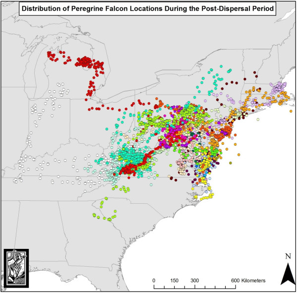 Map showing movements of young peregrine falcons from Virginia during the dispersal period. Different colored dots depict different individuals. Data from CCB.