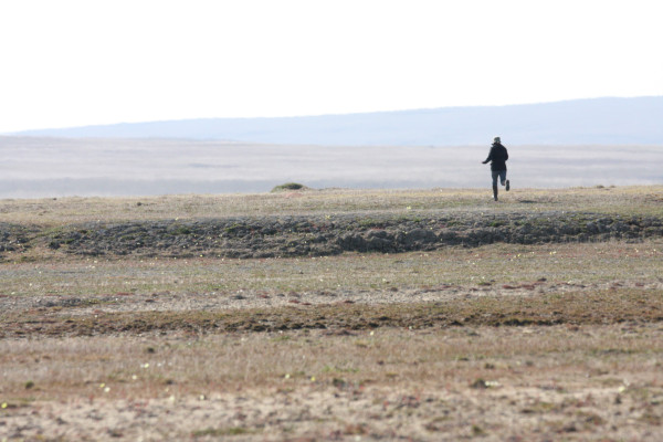 Beth MacDonald (CWS) races to a trapped plover on nesting grounds. Photo by Fletcher Smith.
