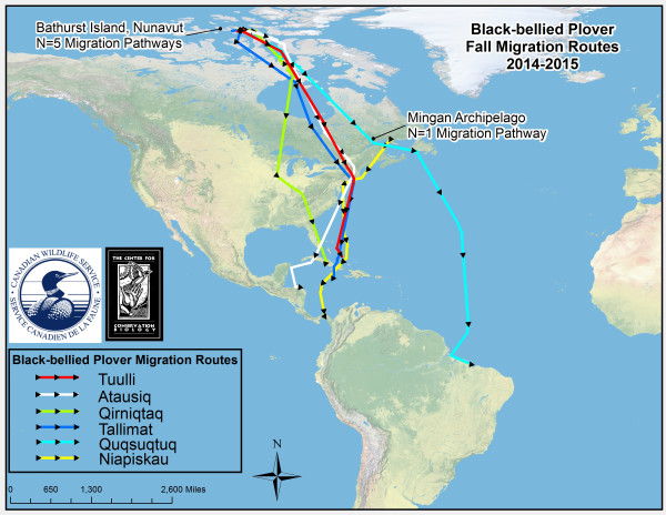 Migration routes of black-bellied plovers tagged on breeding grounds and a stopover location along the St. Lawrence River. Data from CCB.