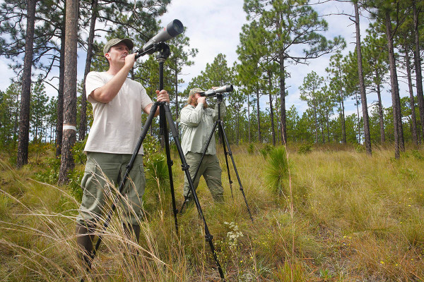 Mike Wilson (left) and Fletcher Smith (right) use spotting scopes within Carolina Sandhills National Wildlife Refuge to identify target birds and they come into roosts. Photo by Bart Paxton.