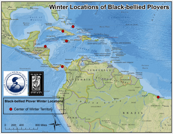 Winter locations of black-bellied plovers tagged in 2014-2015 seasons. Data from CCB.