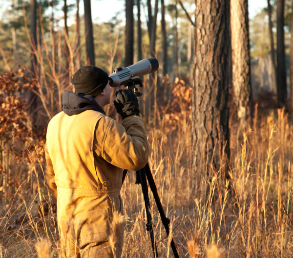 Mike Wilson surveys red-cockaded woodpeckers at the Piney Grove Preserve. Photo by Bryan Watts.