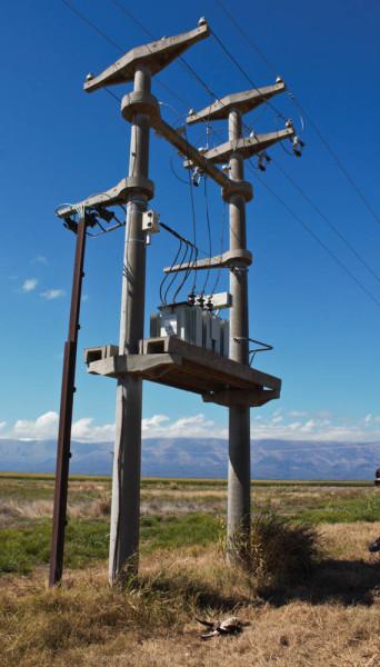 Death Trap power pole where Mahuida was electrocuted (bird on ground under pole). Photo by José Sarasola.