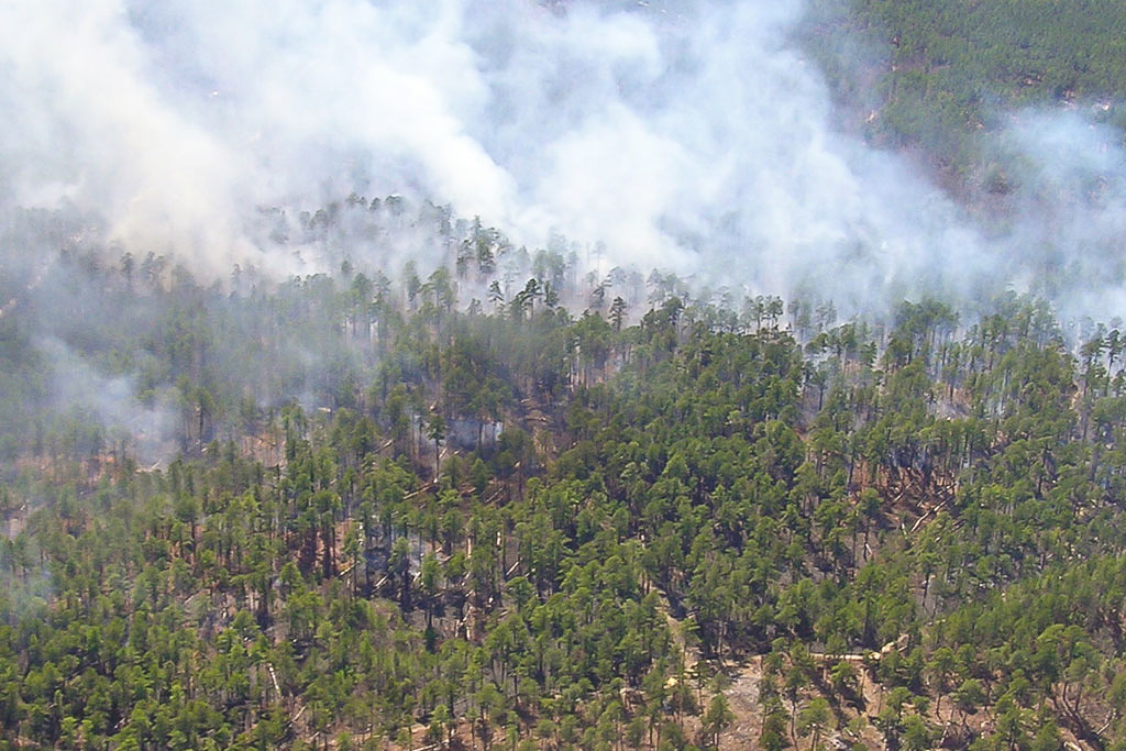 Controlled Burn on Piney Grove Preserve – Aerial view of a controlled burn on Piney Grove Preserve. Fire is a critical component of the southeastern pine ecosystem and must be used as a tool to manage understory plants. The Nature Conservancy burns compartments within the preserve on a 2 to 5 year rotation to maintain the understory community and reduce hardwood encroachment. Photo by Bryan Watts.