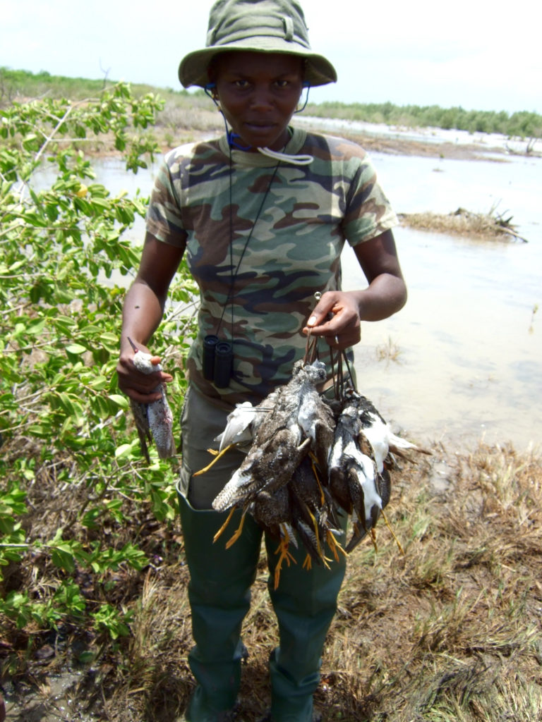"""A lady hunter emerges from a shooting swamp on Guadeloupe with """"bags"""" of shorebirds"""