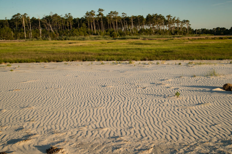 A washover fan of sand now covers a significant portion of Mr. Bur's marsh