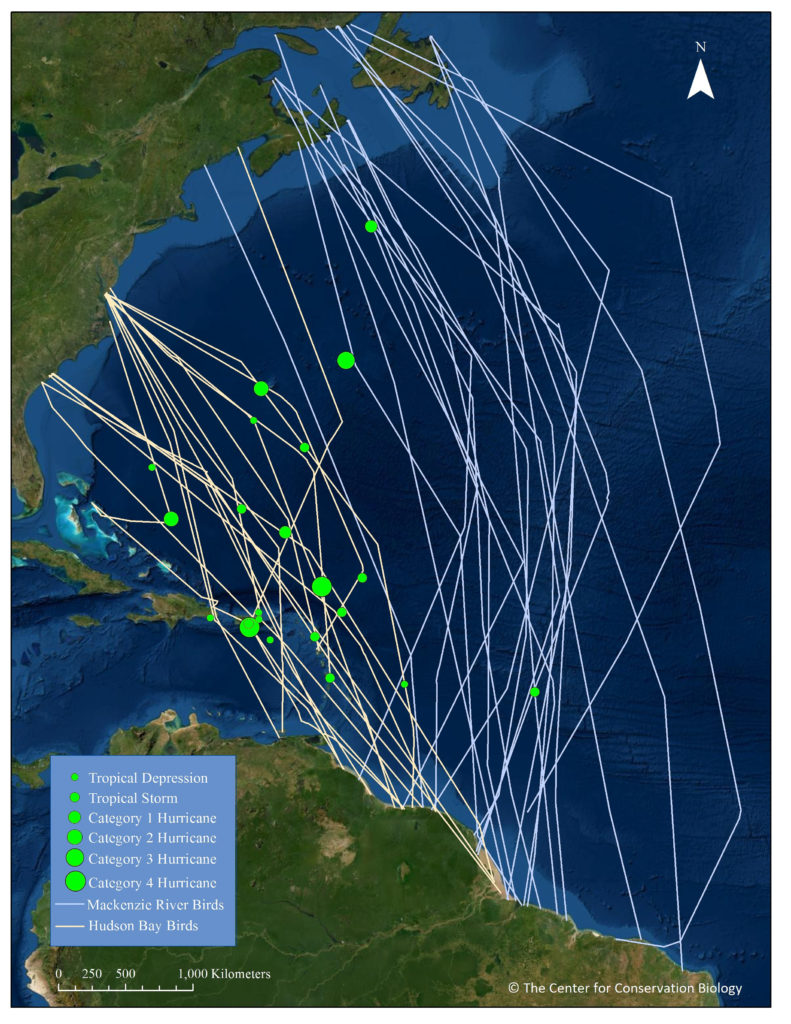 Actual tracks of Mackenzie Delta and Hudson Bay whimbrels crossing the Atlantic and where bird encountered storms