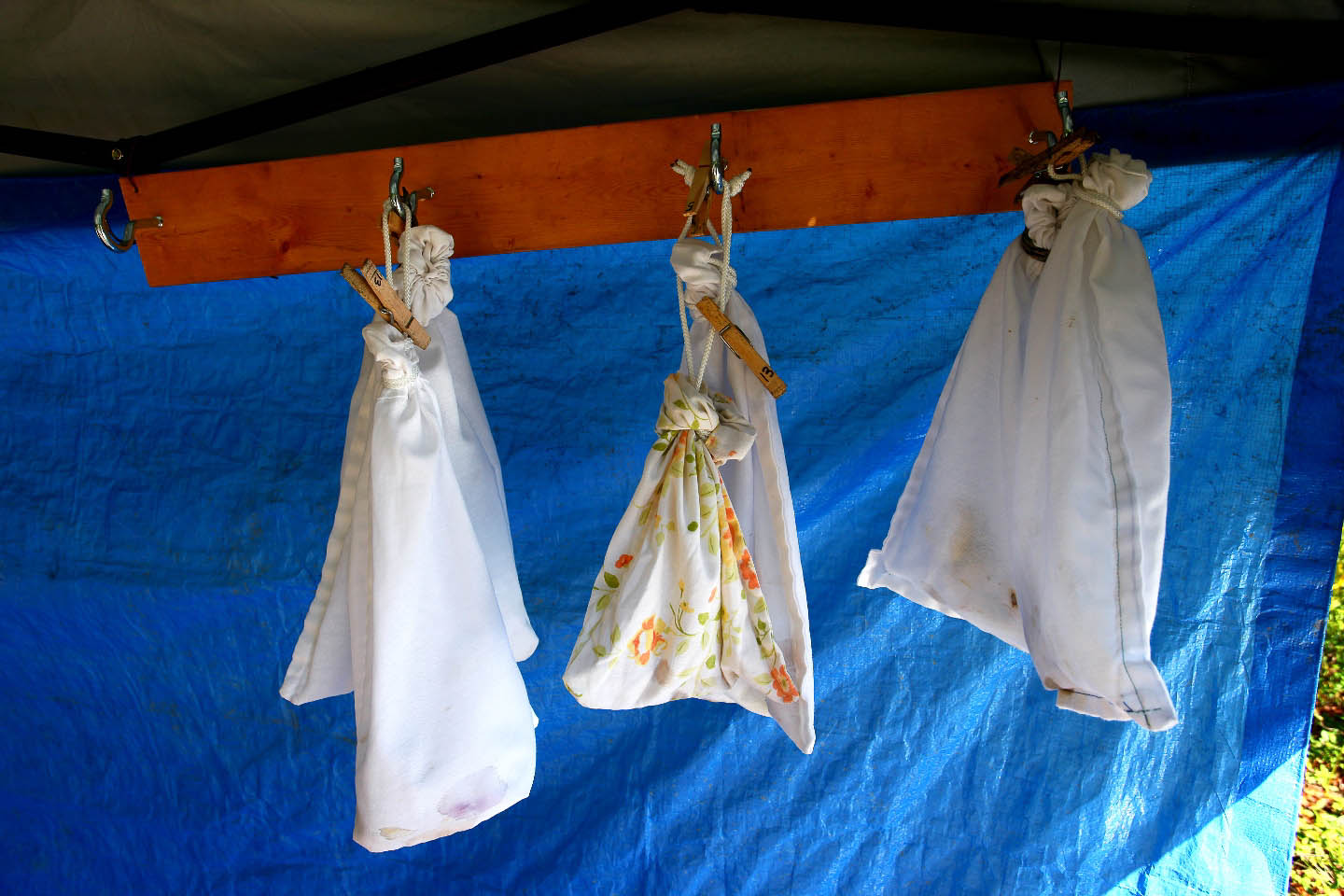 Birds hang in cloth holding bags waiting to be banded