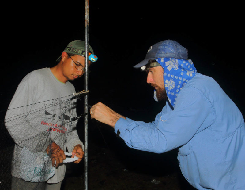 Chance Hines instructs Christian Torres setting up most nets for capturing small shorebirds.