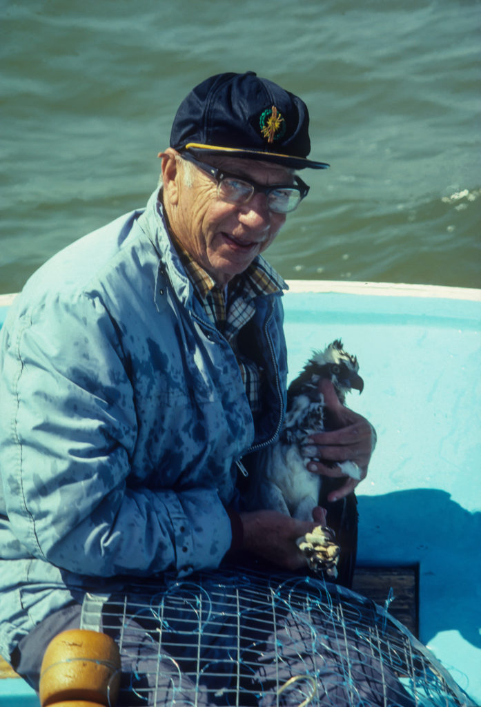 Charlie Hacker with an adult osprey trapped on the York River in the 1980s.