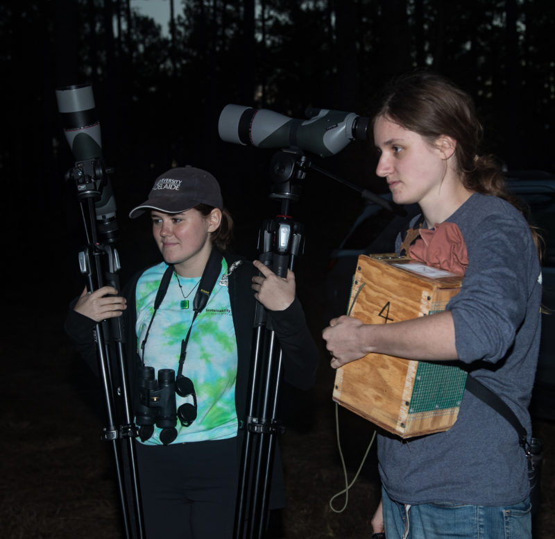 Courtney Check holds a woodpecker in a transport box while Erin Eichenberger carries spotting scopes.