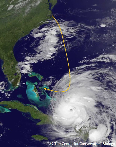 Encounter between whimbrel flying through the western migration route and Hurricane Irene on 24 August 2011