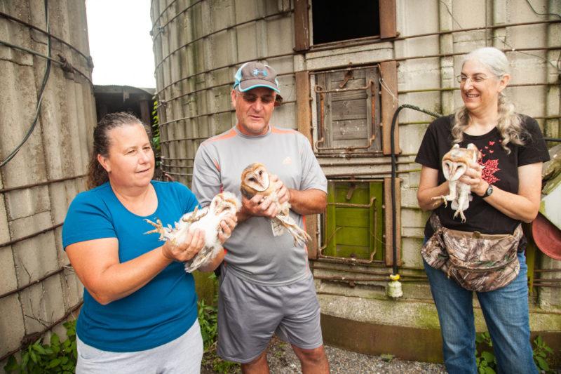 Jill Morrow demonstrates barn owl banding