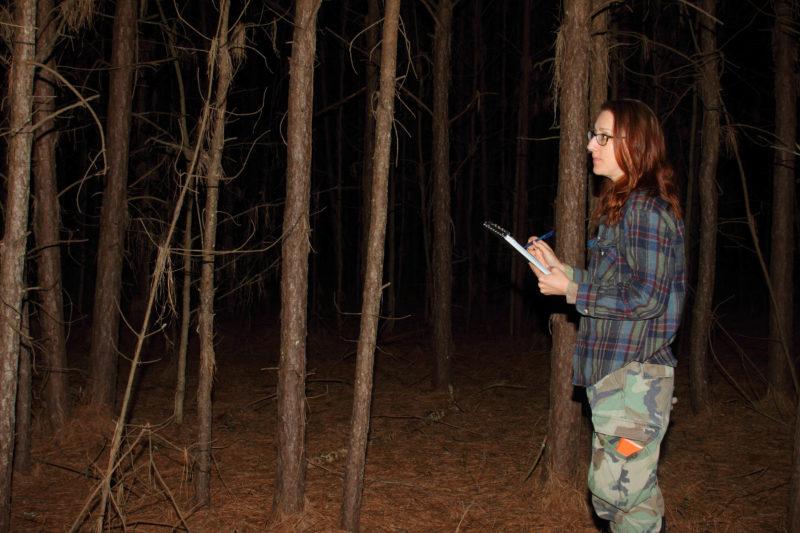 Laura Duval surveys for nightjars along a survey route