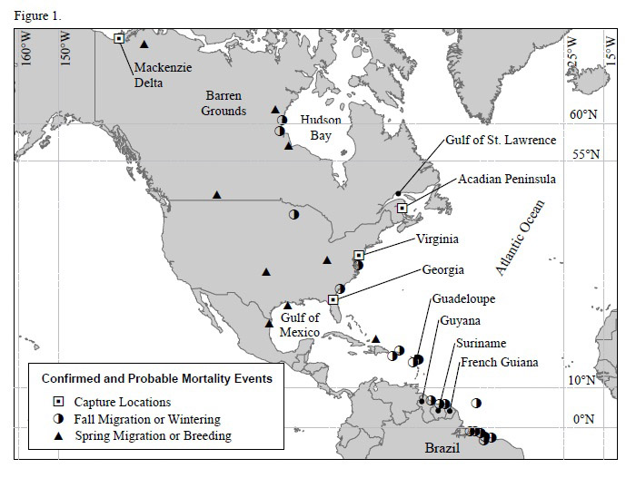 Locations where whimbrels were initially captured and fitted with satellite transmitters and locations of subsequent confirmed or probable mortality events.