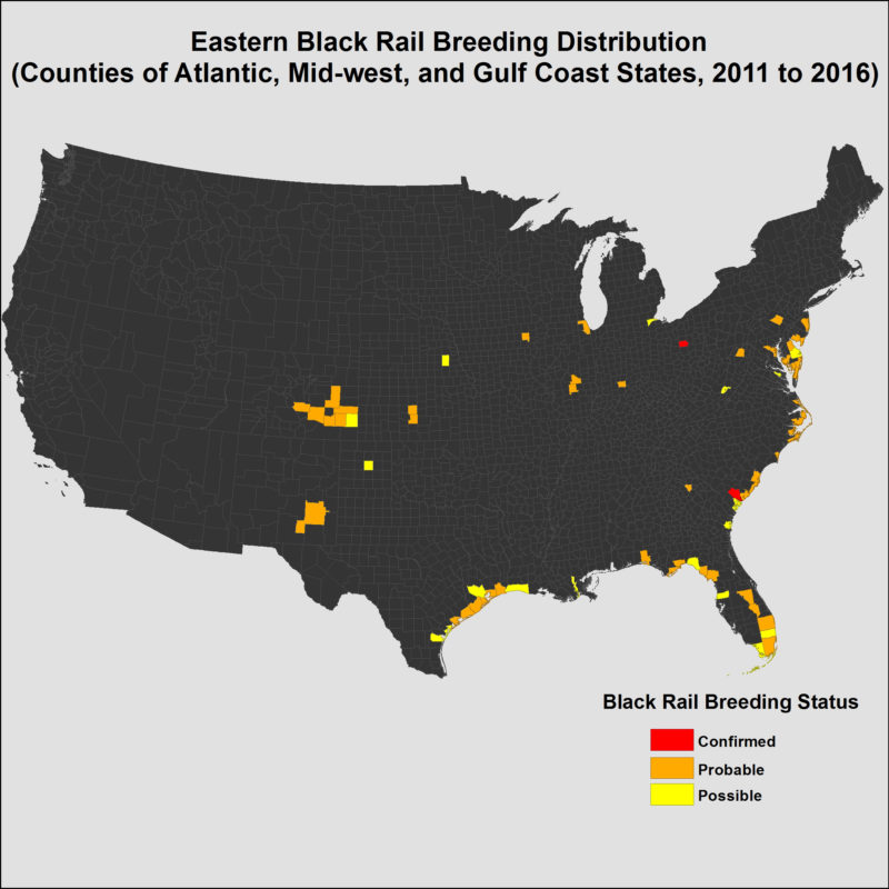 Map of eastern black rails by county from 2011 to 2016.