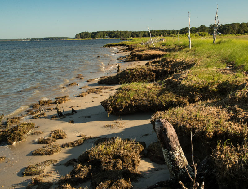 Wave action exacerbated by sea-level rise is eroding the outer edge of Mrs. Tatterson's marsh