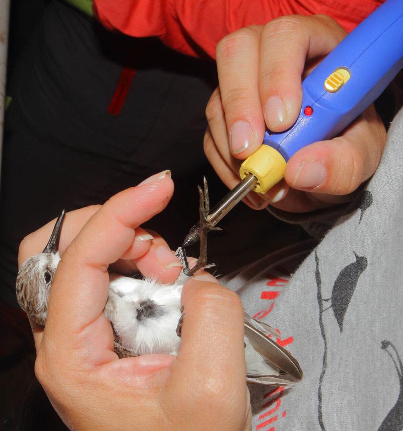 Yenifer Díaz seals a leg flag using a battery-powered soldering iron.