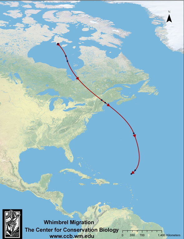 Map of migration route used by Hope from Southampton Island in upper Hudson Bay to near the Virgin Islands, 2009