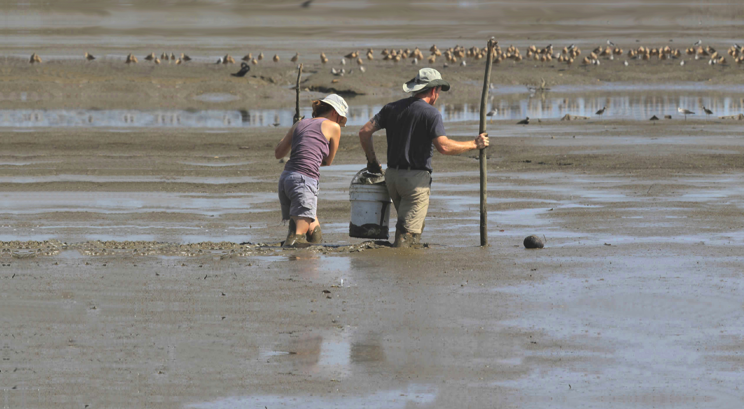 Workers on a Panama mudflat. Photo by the Center for Conservation Biology.